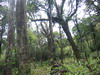 Hoang Lien forest. Click to see full size image
